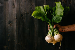 Organic fresh harvested vegetables. Farmer`s hand holding fresh turnip. Black wooden background with copy space Royalty Free Stock Images