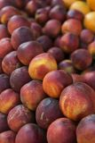 Organic Fresh nectarines in the market. Fruit background. selective focus Royalty Free Stock Photography
