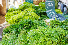 Organic fresh parsley from mediterranean farmers market in Prove. Organic fresh parsley from mediterranean farmers market. Healthy local food market Stock Photography