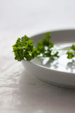 Organic fresh parsley ready to eat on a white plate Royalty Free Stock Photography