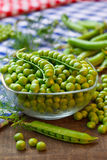 Organic fresh peas in glass bow Stock Photography