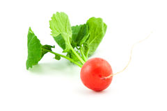 Organic fresh radish on white. A bunch of fresh radishes on white background Royalty Free Stock Photo