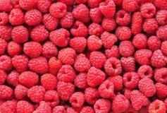 Organic fresh raspberries background Stock Photography
