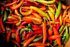Organic fresh red and green chili peppers. On city green market royalty free stock photography