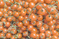 Organic fresh small orange ripe cherry tomatoes on the market on sunny day. Close Stock Photos