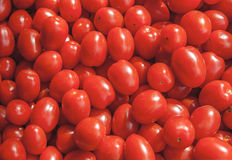 Organic fresh small red ripe cherry tomatoes on the market on sunny day. Close Royalty Free Stock Photography