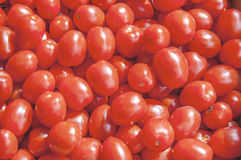 Organic fresh small red ripe cherry tomatoes on the market on sunny day. Close Stock Photo