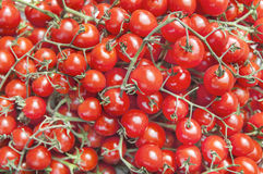 Organic fresh small red ripe cherry tomatoes on the market on sunny day. Close Royalty Free Stock Image