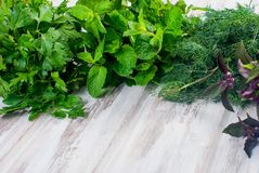 Fresh spicy herbs, dill, basil, parsley, mint Royalty Free Stock Photos