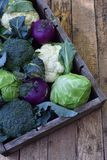 Organic fresh summer vegetables - different varieties of cabbages on wooden background. Cauliflower, kohlrabi, broccoli, white hea. D cabbage. Raw food Stock Photos
