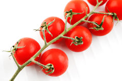 Organic fresh tomatoes on the vine Royalty Free Stock Image