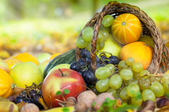 Organic fruit in basket in autumn grass Royalty Free Stock Photos