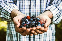 Farmer with blackberries Royalty Free Stock Photo