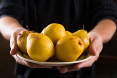 Organic fruit. Healthy food. Fresh ripe pears in farmers hands Stock Image