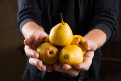 Organic fruit. Healthy food. Fresh ripe pears in farmers hands Royalty Free Stock Photography
