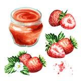 Organic fruit jam set. Glass jar of strawbery marmalade and fresh fruits isolated on white background. Watercolor hand drawn illu. Stration vector illustration