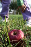 Organic fruit. An organic red apple laying in the grass with kid in background leaning to pick it up Stock Photo