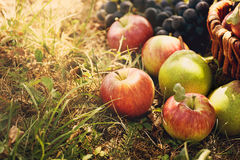 Organic fruit in summer grass Royalty Free Stock Images