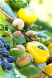 Organic fruit and vegetable Royalty Free Stock Photos