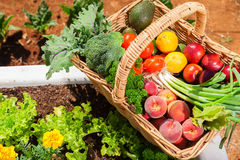 Organic fruit and vegetables Royalty Free Stock Photography