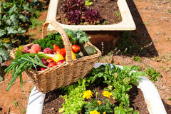 Organic fruit and vegetables Royalty Free Stock Photo