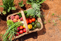 Organic fruit and vegetables Royalty Free Stock Image