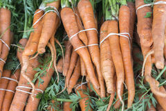 Organic Fruits and Vegetables in Farmers Market : Wilson Park, T. Wison Park Farmers Market, Torrance, California. Bunch of fresh carrots with stems attached Stock Photography
