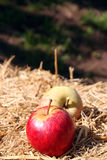 Organic Gala and Fuji Apples. On a Hay Bale royalty free stock photography