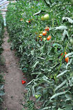 Organic garden Stock Photography
