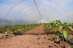 Organic garden Stock Image