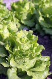 Organic garden Stock Photo