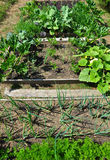 Organic garden Stock Images