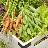 Organic Garden Harvest Stock Images
