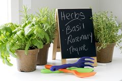 Organic Garden Herbs ready for Springtime Planting Stock Images