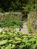 Organic garden: pumpkin patch Royalty Free Stock Image