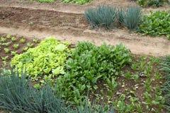 Organic gardening Royalty Free Stock Images