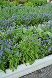 Organic Gardening Stock Images