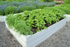 Organic Gardening Royalty Free Stock Image
