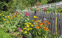 Organic gardening with annual flowers royalty free stock photos