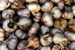 Organic Garlic (Allium sativum) Royalty Free Stock Images