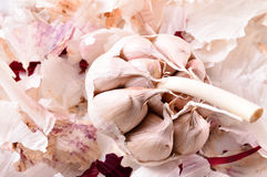 Organic garlic. Natural antibiotic. Healthy food. Natural backgr Stock Photos