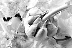 Organic garlic. Natural antibiotic. Healthy food. Natural backgr Royalty Free Stock Photography