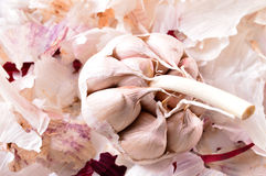 Organic garlic. Natural antibiotic. Healthy food. Natural backgr Stock Photography