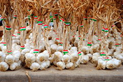 Organic garlic in a row Stock Photography