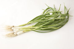 Organic garlic seeding background Stock Photography