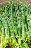 Organic Garlic Sprouts. Food Background Royalty Free Stock Photography