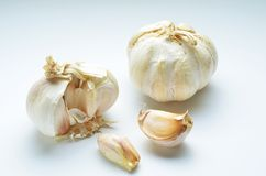 Organic garlic whole and cloves on the white background. The garlic is a species in the onion genus, Allium. Its close relatives include the onion, shallot stock images