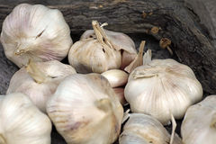 Organic garlic Stock Photography