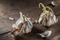 Organic garlic on wood Stock Photography