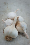 Organic garlic on a wooden board Royalty Free Stock Image